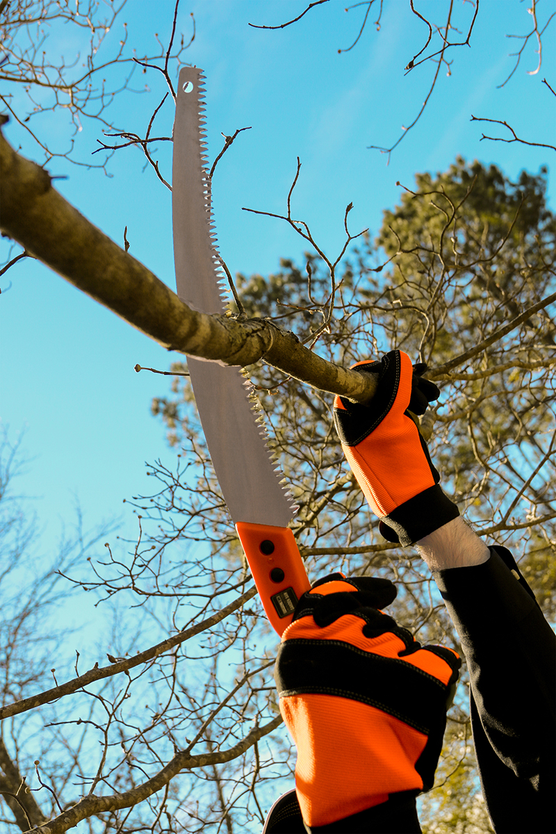 Hand Saw cutting branch